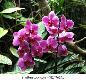 orchid flower,  spring, background, flowers, flower, nature, floral, garden, summer, beautiful, landscape, pink, blossom, white, tree, green, sun, field, season, beauty, natural, plant, botany,
