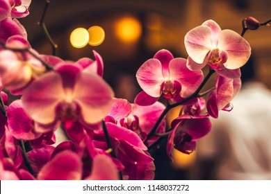 Orchid flower in winter or spring day tropical garden background in Thailand. Use for postcard beauty and agriculture idea concept design.
