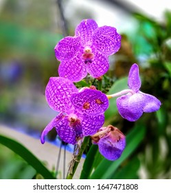 orchid flowers from Assam India