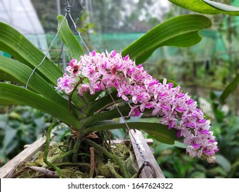orchid flowers from Assam at kohora village
