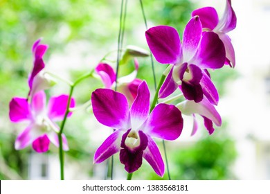 Orchid flowers are blooming with a variety of colors.