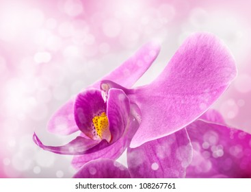 Orchid flowers, closeup