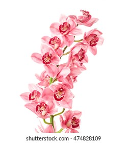 Orchid flowers with drops of water isolated on white background