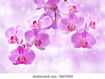 Orchid flowers, greetings card