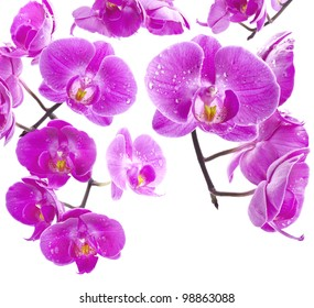 Orchid flowers, greetings card, isolated on white background