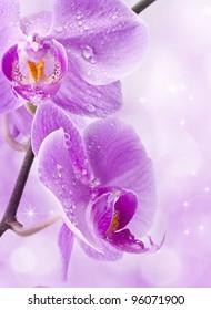 Orchid flowers, greetings card, macro