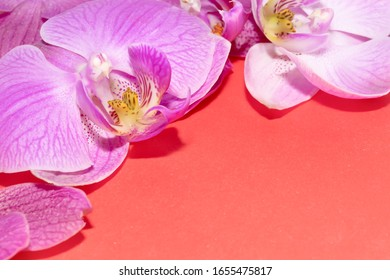 Orchid flowers on red background