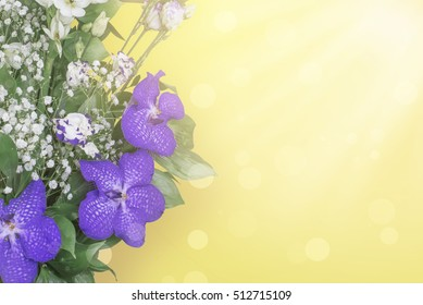 Orchid flowers on a sunshine yellow background with patches