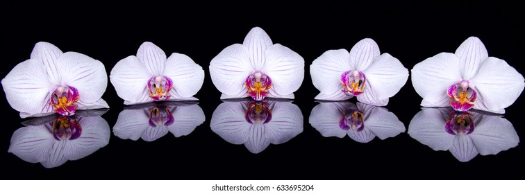 Orchid flowers with reflection on a black acrylic background