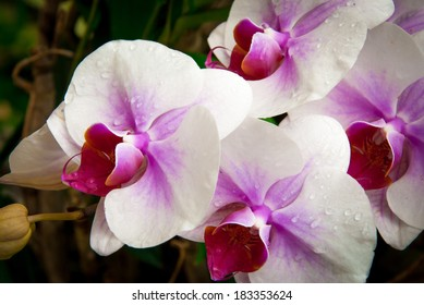 Orchid flowers in a temple garden