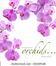 Orchid flowers with water drops, greetings card (with sample text)