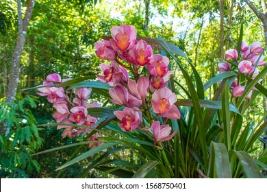 Orchid garden. Orchid background. Colorful orchid.