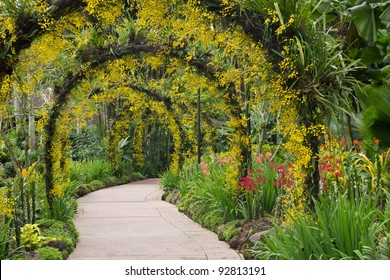 Orchid garden, Singapore botanic garden