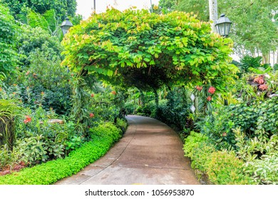 Orchid Garden at Singapore Botanic Gardens