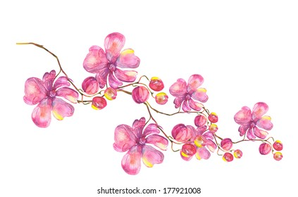 Orchid Garland. Watercolor painting..