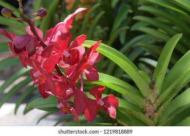 orchid with green background.