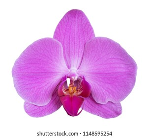 Orchid isolated on white background. Single flower with lilac petals and yellow purple lip. Phalaenopsis or Moth kind. Floral design element for cards, invitations, posters.