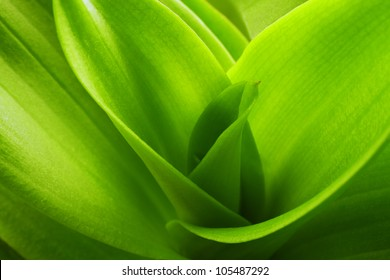 orchid leaves background