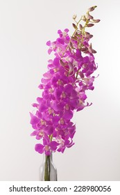 Orchid, long stem purple pink Thai orchid in white background