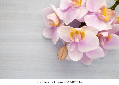 Orchid on a stone surface. Studio photography.