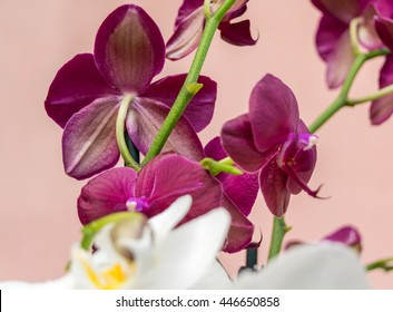 orchid on the table