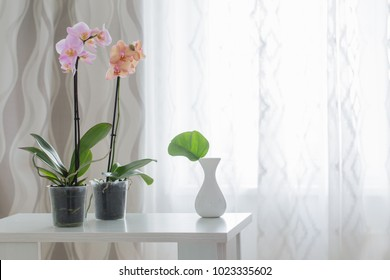 orchid on table on the window background