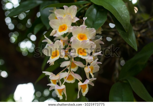 orchid on the tree