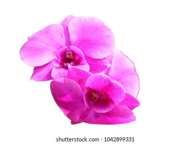 Orchid on white background.