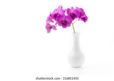 orchid on white blackbackground