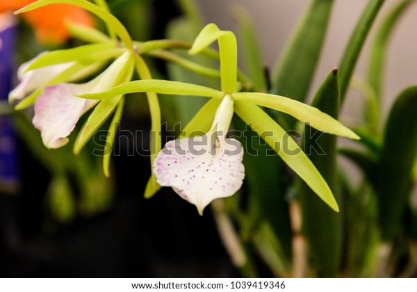 Orchid Orchidaceae. Popular around the globe for their beauty and variety, orchids are the largest family of plants in the entire world