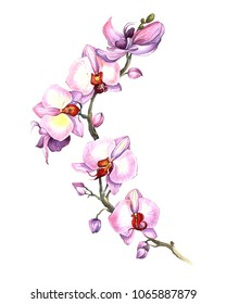 orchid orchids flowers love illustration floral home beauty watercolor