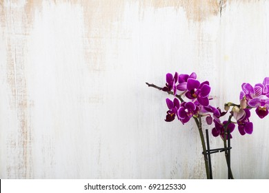 Orchid (Phalaenopsis ) on a wooden background close-up
