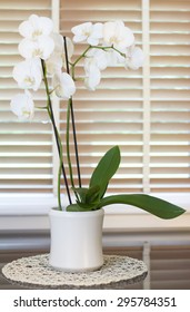 orchid plant with plenty white flowers in top a gray mirror table