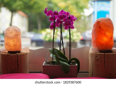 orchid plant and  saltlamps on wood infront of a window closeup macro