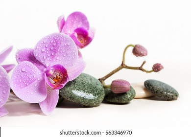 Orchid and spa stones on a white background. Beautiful pink flowers on a branch. drops of water