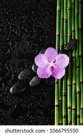 orchid with stones on bamboo grove-wet background