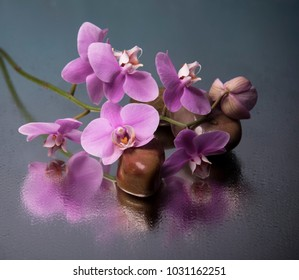 orchid and stones on the wet surface