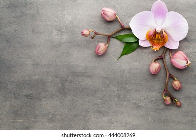 Orchid theme objects on the grey background.