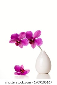 Orchid in a white vase on a white background.