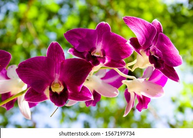 Orchids with beautiful colors are good export business and are naturally beautiful.