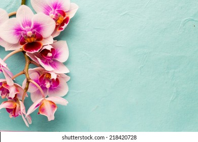 Orchids bloom. White with pink color. Spa card.