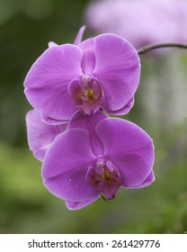 Orchids, cultivated in a garden
