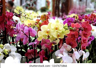 Orchids in different colors, greenhouse flower mix, Holland