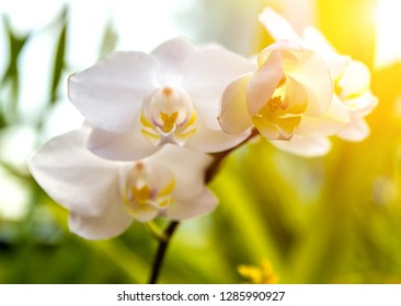Orchids exotic Floral background flower in tropical garden sunset tone - spring sun day for Florals postcard.