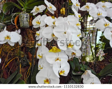 keeping orchids