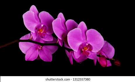 Orchids flowers on banch on black background. Selective focus.