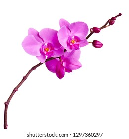 Orchids flowers on banch isolated on white background. Selective focus