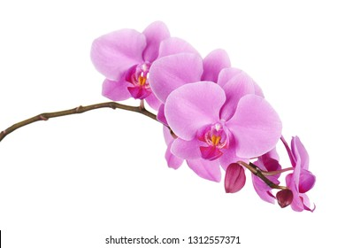 Orchids flowers on banch isolated on white background. Selective focus.