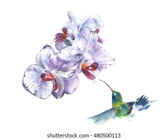 Orchids the flowers tropical flowers watercolor painting illustration isolated on white background greeting card