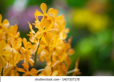 Orchids with a green leaf background